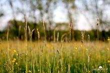 Aufgenommen mit: Canon EOS 550D // Objektiv: 50mm // ISO 400 // 50mm // f2.8 // 1/250