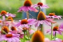 Dieses Foto haben wir im Sommer im Renchener Stadtgarten aufgenommen. Die tollen Blumenfelder dort waren an einem Sommerabend prädestiniert für tolle Fotos.
