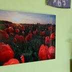 Produkttest: Wandbild Tulpen