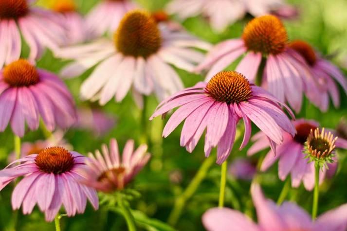 Blumenmeer im Stadtgarten.